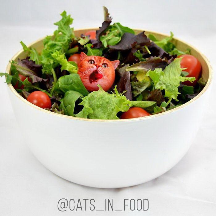 Инстаграм Cats In Food: кошки в еде