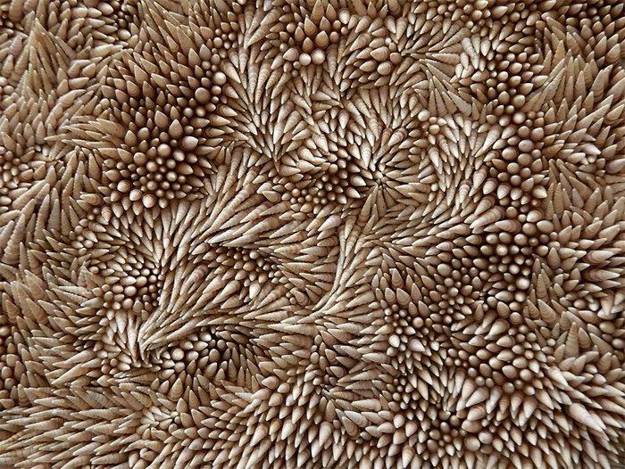 Ковер из морских ракушек Rowan Mersh