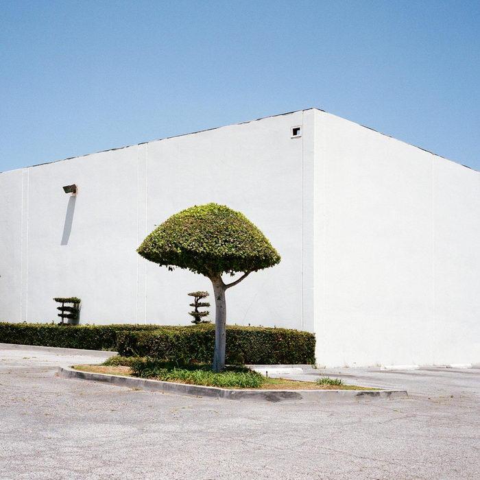 Городские деревья в снимках Sinziana Velicescu
