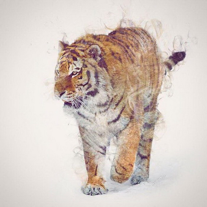 Животные в фотографиях D?niel Taylor