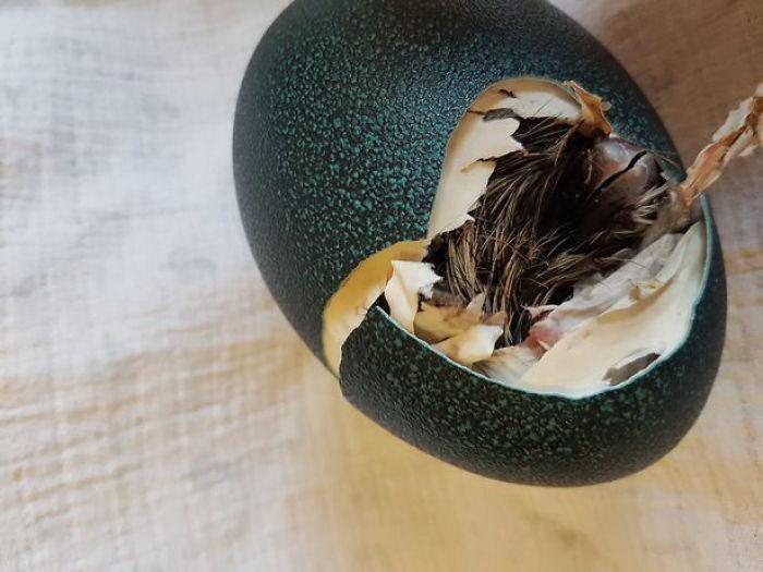Купленное на Ebay за 30$ яйцо стало экзотической птичкой