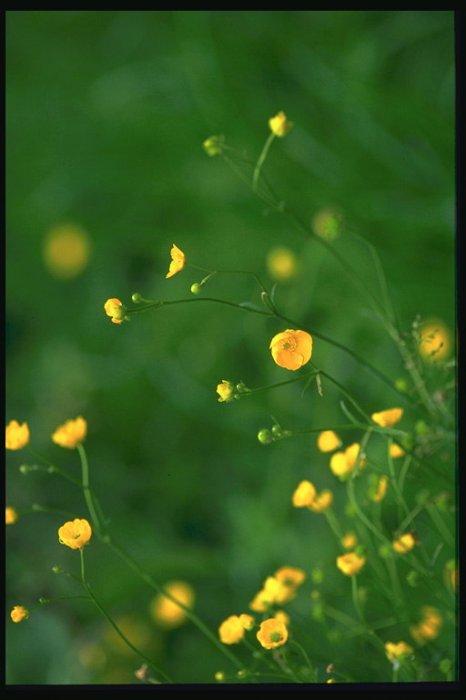 Мелкие желтые цветы Поля и реки -2 Водные Пейзажи МИР ФОТО.