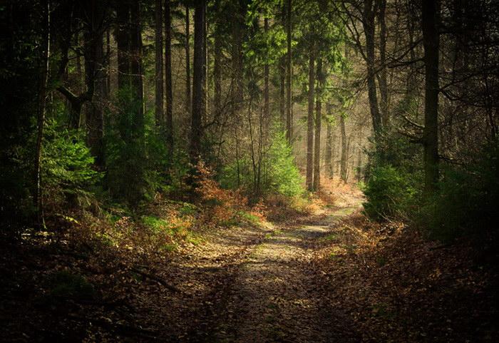Волшебные фотографии леса Alex Wesche