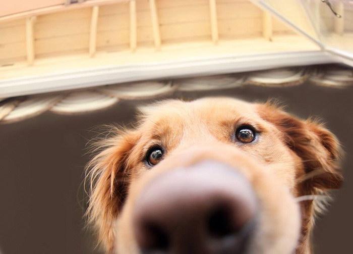 20 фотографий очень любопытных собак