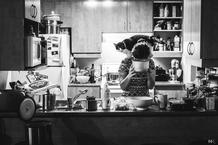 Каково жить в квартире с 4 кошками: фото Mikaël Theimer