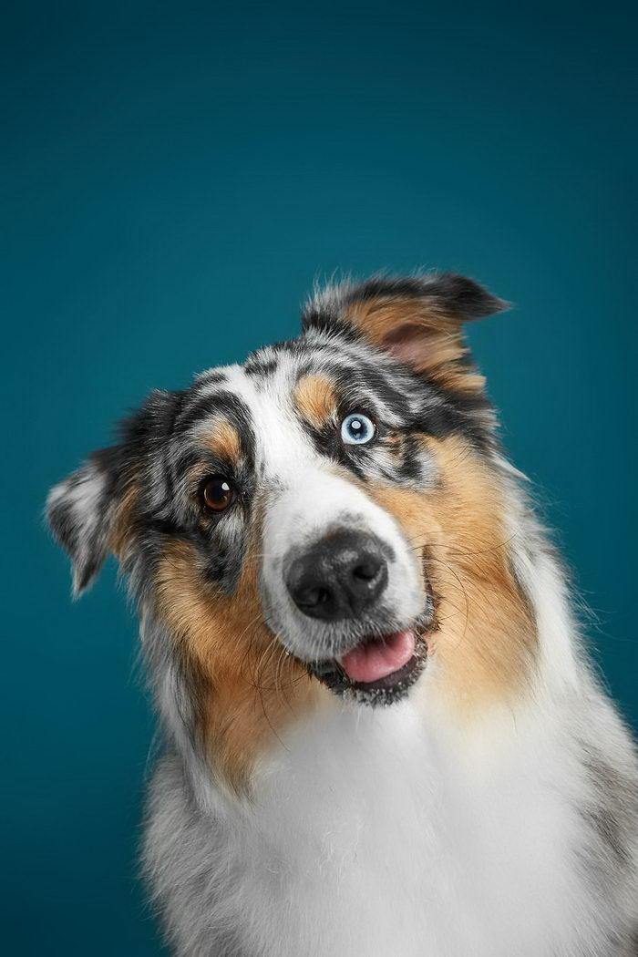 Очаровательные собаки в снимках Александра Хохлова