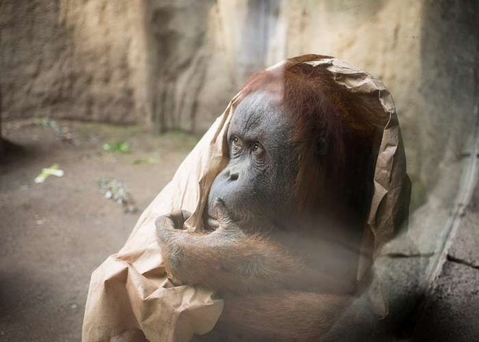 thesis for why zoos are bad Some people think zoos are bad, while some think they are good and help the animals keeping animals in zoos good or bad free essays and, of course.