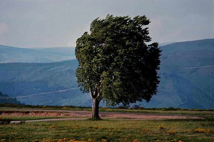 Деревья разных стран в фотографиях Frank Horvat