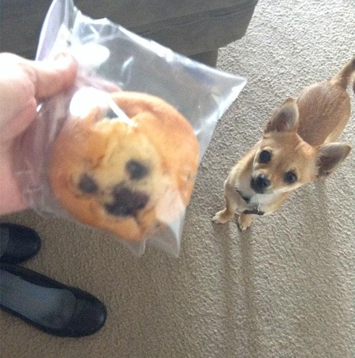 Собаки, напоминающие что-то еще