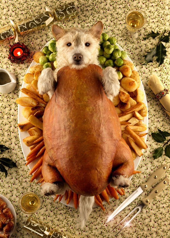 Собачки — модели новогодних открыток