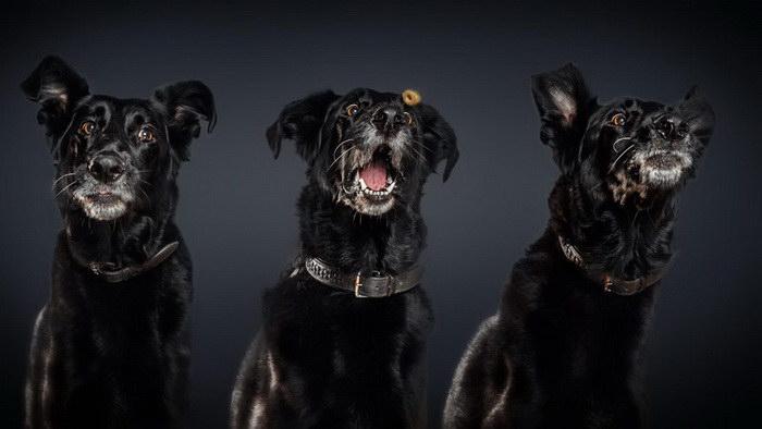 Голодные собаки в фотографиях Christian Vieler