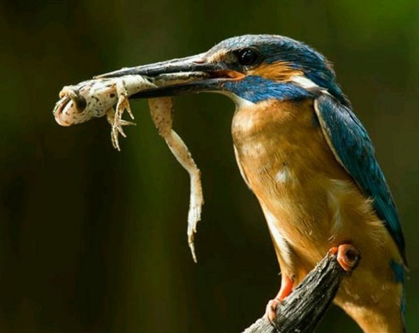 Ас в рыболовле