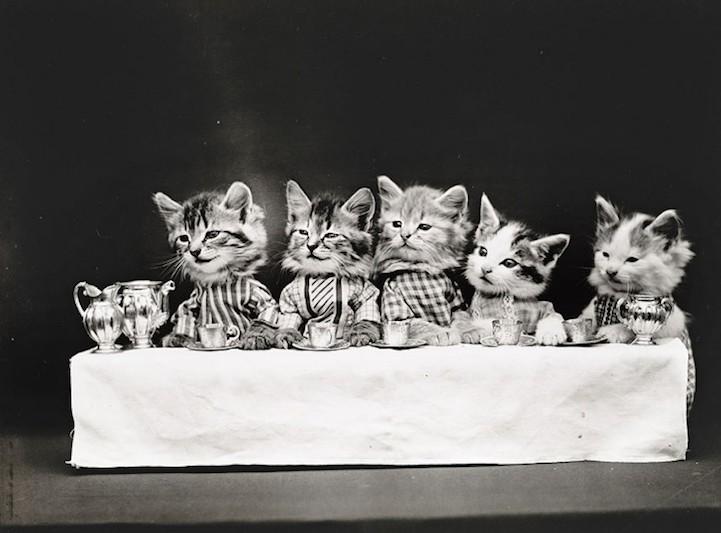 Фотографии кошек, сделанные в начале XX века