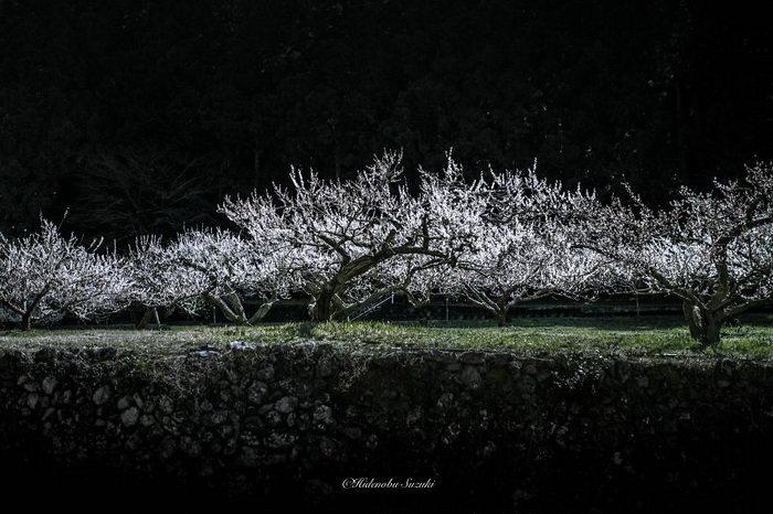 Розовые оттенки весны в Японии