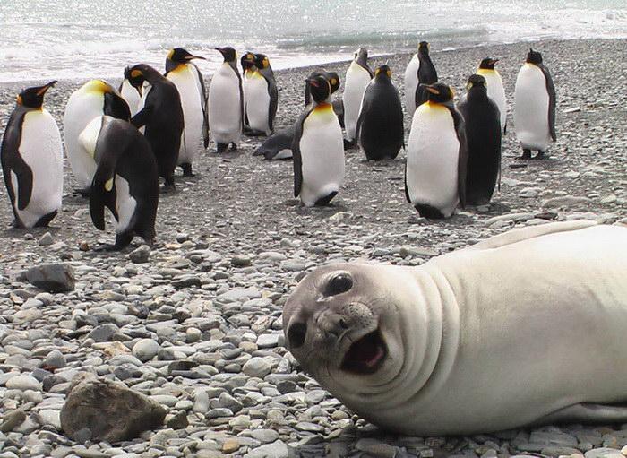 30 животных, которые очень правильно влезли в кадр