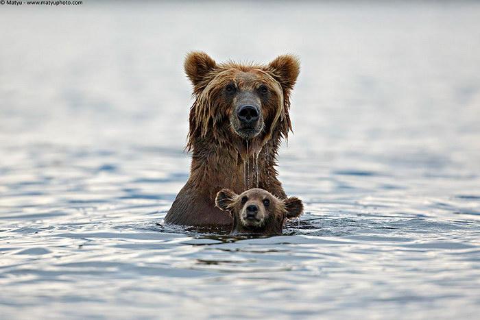 Дети и медведи 43
