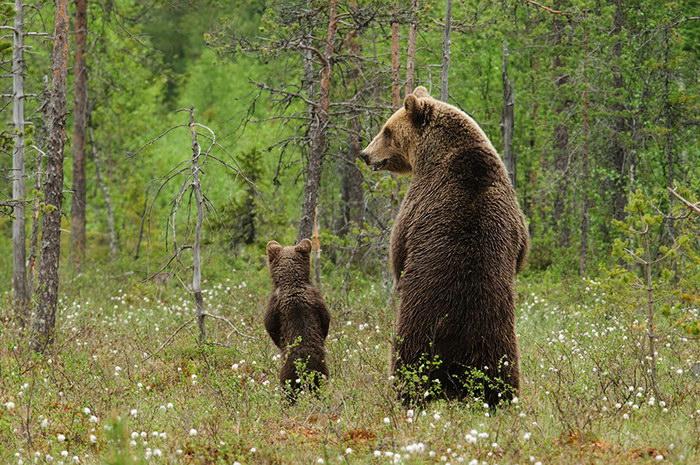 Дети и медведи 79