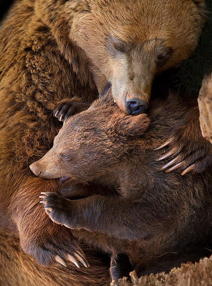 Медведи-мамы и медведи-дети