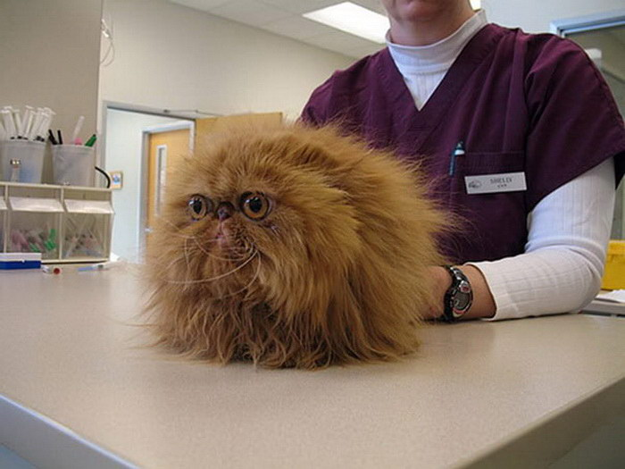 20 кошек, которые боятся идти к ветеринару