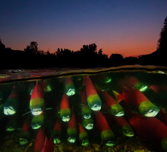 Подводные фотографии David Hall