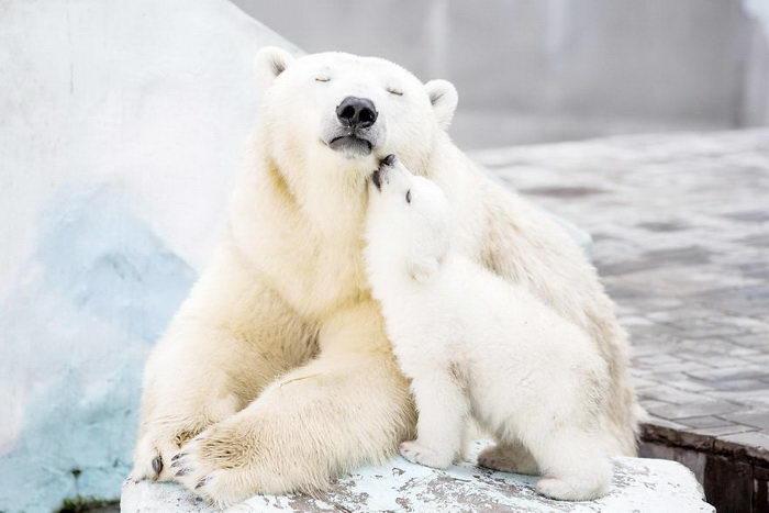 15 фотографий медведей вместе со своими малышами