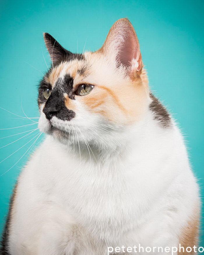 Толстые и большие кошки: фото Pete Thorne
