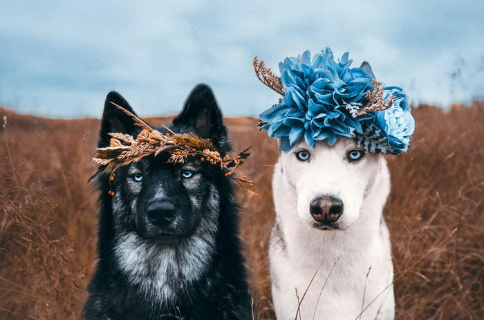 Дружба двух собак на снимках Chelsee Taylor