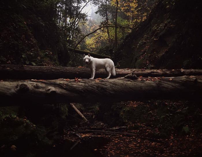 Путешествие человека и собаки