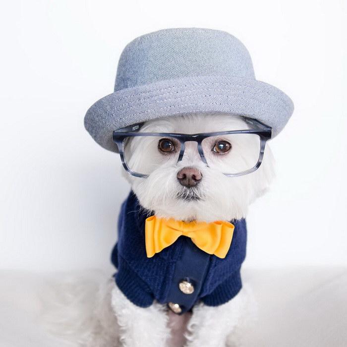 Тоби — пес-хипстер из США