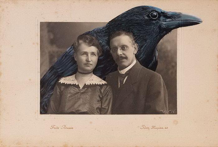 Птицы на старых фотографиях Anja Wulfing