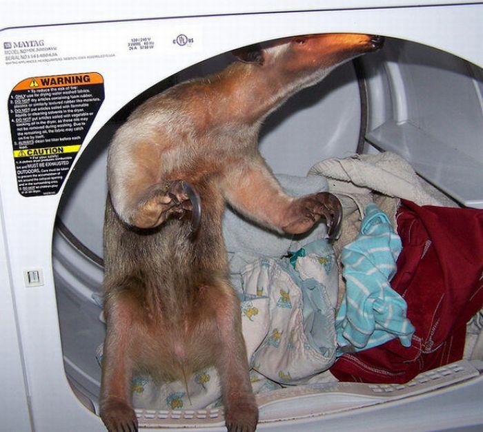 Как превратится в животное в домашних условиях