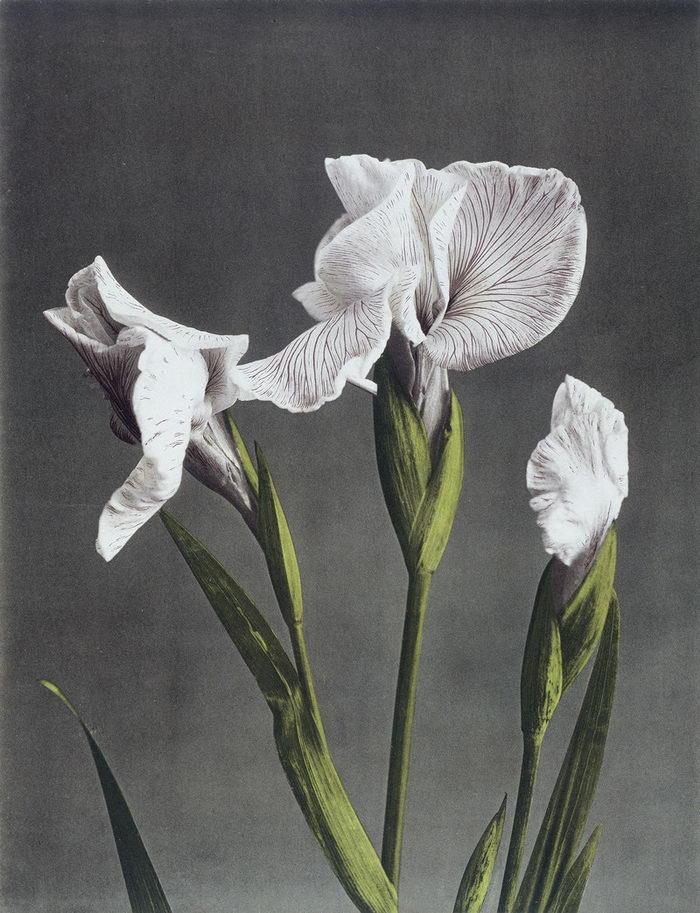 Яркие цветы в снимках Ogawa Kazumasa