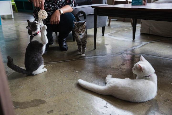 Кошачье кафе в Нью-Йорке