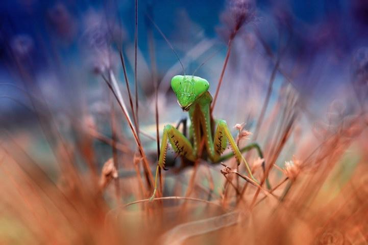 Невероятная природа Nordin Seruyan
