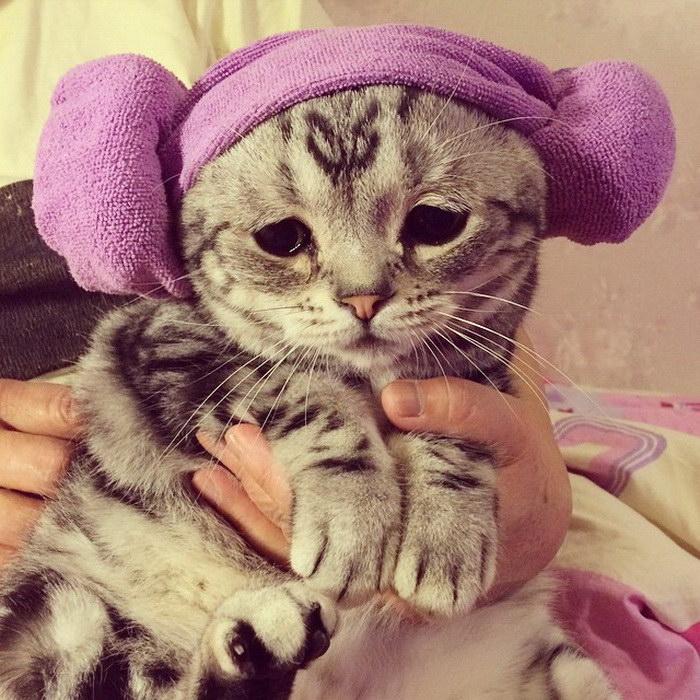 Луху: самый грустный котик на земле