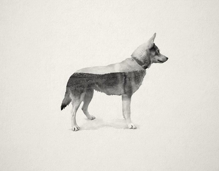 Коллажи собак Chanel & Stivo