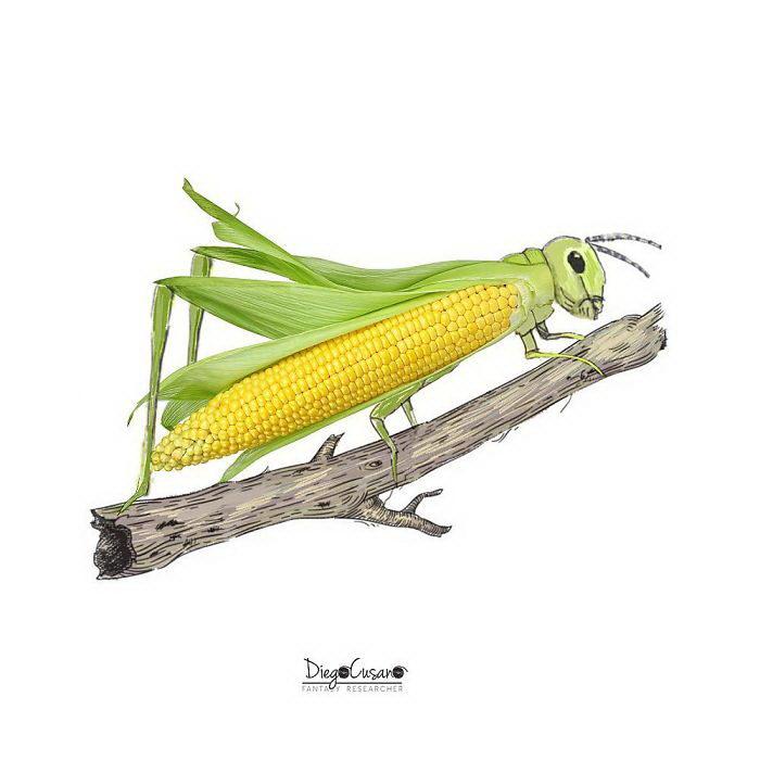 Оригинальные иллюстрации Diego Cusano
