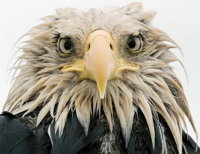 Победители конкурса Wildlife Photographer of the Year 2017