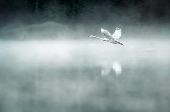 Величественность финской природы
