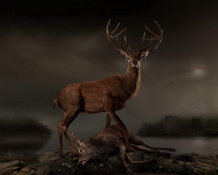Красота животных в фотографиях Joseph McGlennon