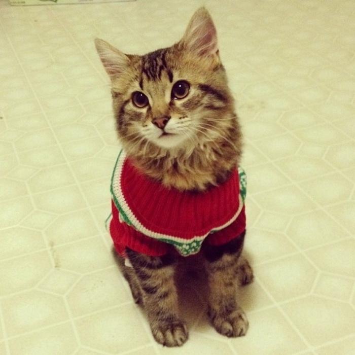 Новогодние костюмы животных