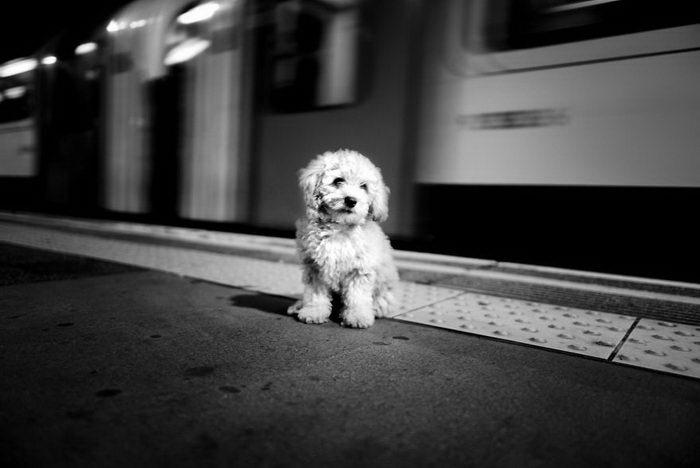 Собаки из разных краев света: фото Alan Schaller