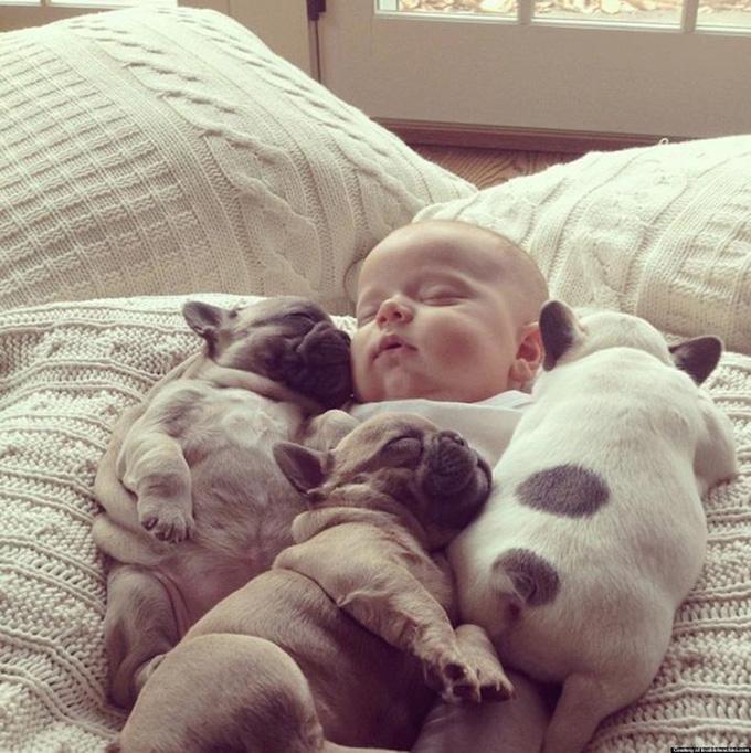 Малыш и щенки