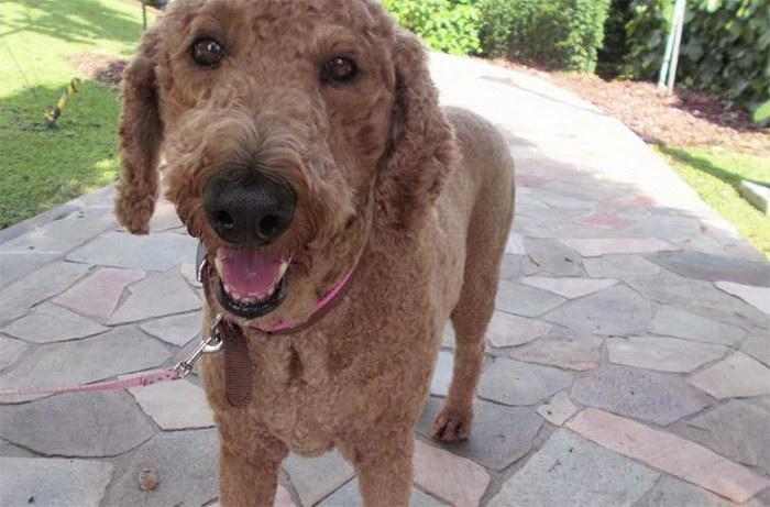 Необычная камера Nikon позволяет делать снимки вашей собаке