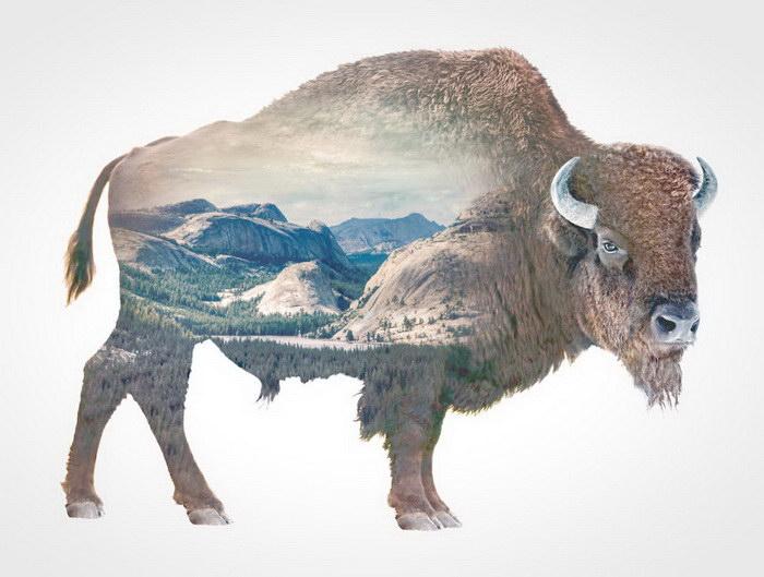 Животные и природа: двойная экспозиция