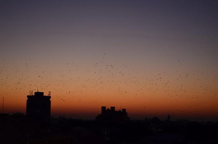 Девушка в течение 3 лет фотографировала закаты с крыши института