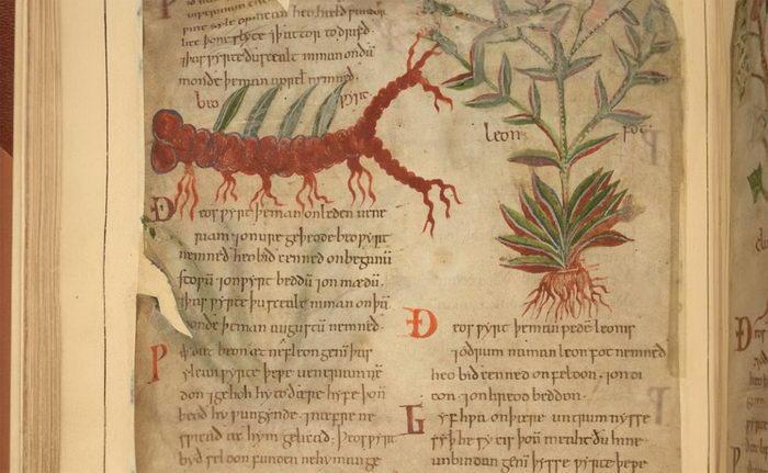 1000-летняя книга по биологии, описывающая лечебные растения