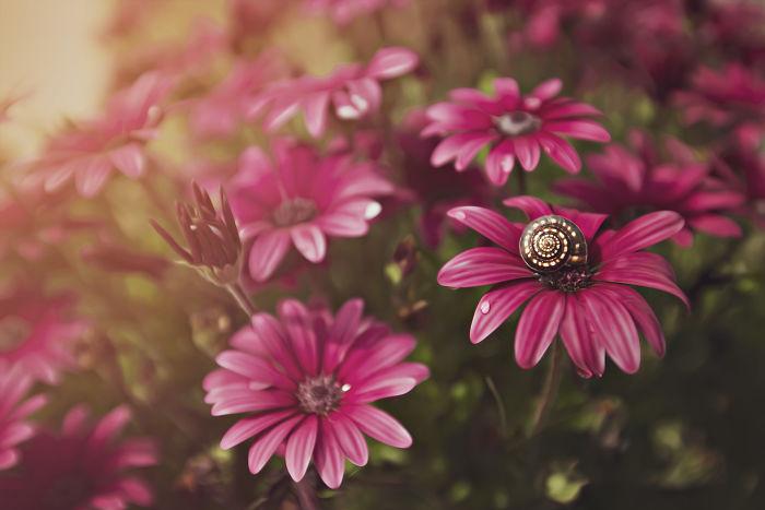 Макрофотографии цветов Dina Telhami