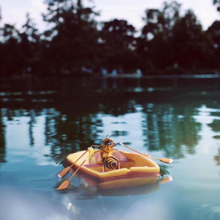 Первая в мире пчела-инфлюэнсер @bee_nfluencer