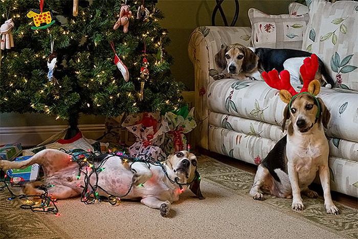 Новогодние шалости животных